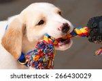 adorable labrador retriever...   Shutterstock . vector #266430029