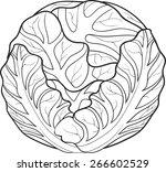 cabbage | Shutterstock .eps vector #266602529
