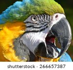 Parrot. Animal Face. Colorful...