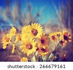 a bunch of pretty balsamroot... | Shutterstock . vector #266679161