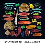 collection of colorful and dry... | Shutterstock . vector #266782595