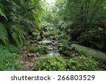 man exploring dense tropical... | Shutterstock . vector #266803529