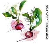 beets  radishes   Shutterstock .eps vector #266921939