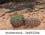 Small photo of Gymnocalycium spegazzini and Acanthocalycium thionanthum in habitat near El Obelisco, Salta, Argentina
