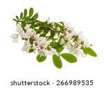 black locust branch with white  ...   Shutterstock . vector #266989535