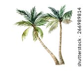 palm tree isolated on white...   Shutterstock . vector #266989814
