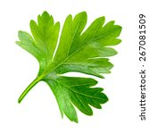 Parsley. One Leaf Isolated On...