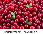 Cranberry With Leaves. Red...