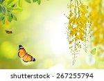 Golden Flower Or Cassia Fistula ...