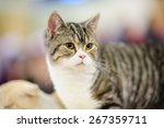 funny cat with blurred... | Shutterstock . vector #267359711