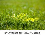 abstract natural backgrounds  | Shutterstock . vector #267401885