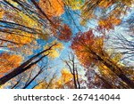 Beautiful Trees Set Against The ...