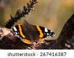 Butterfly Vanessa Atalanta On...