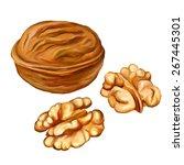 Walnuts Vector Illustration ...