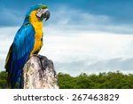 Blue And Yellow Macaw In...