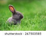 little rabbit on green grass in ... | Shutterstock . vector #267503585