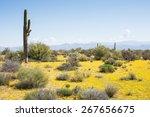 Sonoran Desert Landscape  2