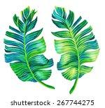 banana palm leaves. single...   Shutterstock . vector #267744275