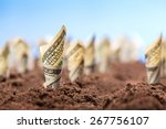 american dollars grow from the...   Shutterstock . vector #267756107