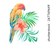Tropical Birds Isolated On...