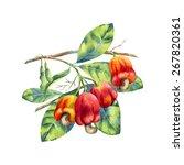 vector watercolor cashew branch ... | Shutterstock .eps vector #267820361
