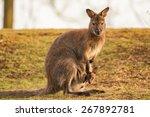 Kangaroo Mother  Common...