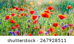 Wildflowers  Poppies And...