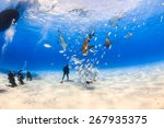 Diver Surrounded By Lemon Shar...