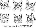 Cat  Portrait  Graphic Image