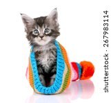 Stock photo cute kitten sitting in striped hat 267983114