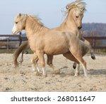 two amazing palomino stallions... | Shutterstock . vector #268011647