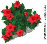 red flower | Shutterstock .eps vector #268036661
