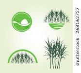 sugar cane    Shutterstock .eps vector #268162727