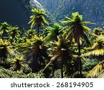 beautiful rainforest with palm... | Shutterstock . vector #268194905