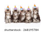 Stock photo large group of small maine coon cats with birthday hats isolate 268195784