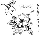 hand drawn blooming wild rose | Shutterstock .eps vector #268230545