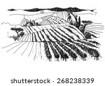 vineyard landscape ink pen... | Shutterstock .eps vector #268238339