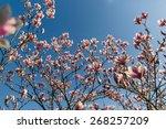 Blossom Bloom Magnolia