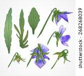 vector vintage botanical...   Shutterstock .eps vector #268268039