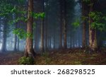 Landscape Of Dark Forest With...