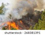 wildfire. | Shutterstock . vector #268381391