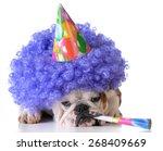 Birthday Dog   Bulldog Wearing...