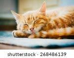 Stock photo peaceful orange tabby male kitten curled up sleeping on floor 268486139
