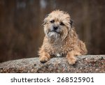 Funny Shaggy Dog Lying On A...