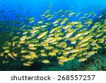 Fish Shoal On Coral Reef ...