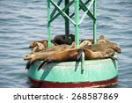 Sea Lion Pups And Yearlings...