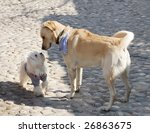 dogs sniffing each other on a... | Shutterstock . vector #26863675