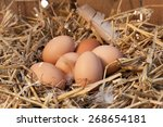 Nest With Chicken Eggs