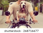 Stock photo dog sitting on the bike going to travel 268716677