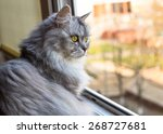 Stock photo beautiful grey cat sitting on windowsill and looking out of a window 268727681